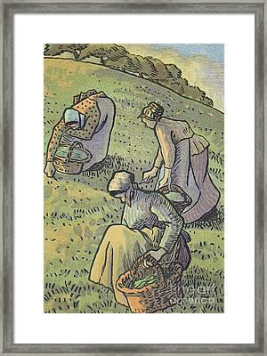 Women Gathering Mushrooms Framed Print