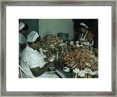 Women Pick And Pack Crab Meat Into Cans Framed Print