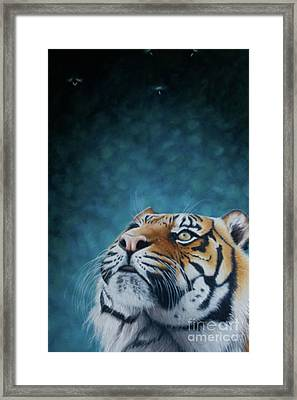 Wonder Framed Print by Pauline Sharp