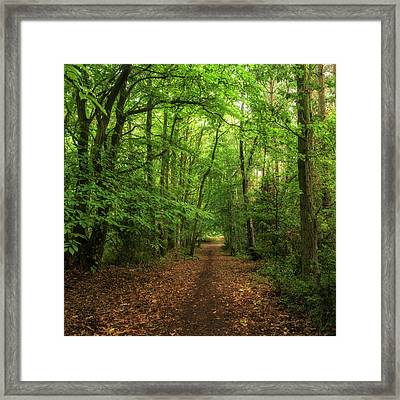Wonderful Atmospheric Forest Landscape Image In Autumn Fall Framed Print by Matthew Gibson