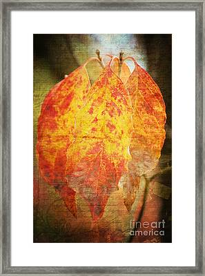Wonderful Autumn Framed Print