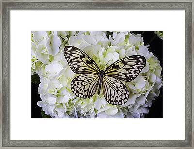 Wonderful Butterfly Framed Print by Garry Gay