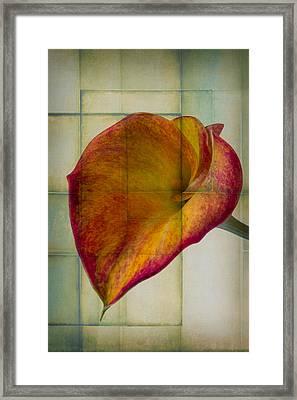 Wonderful Calla Lily Framed Print by Garry Gay
