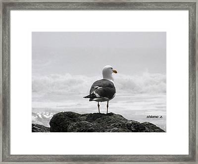 Wonderful Morning. Framed Print
