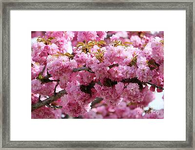 Wonderful Pink Blossoms Framed Print by Carol Groenen