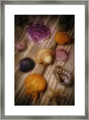 Wonderful Shell Still Life Framed Print by Garry Gay