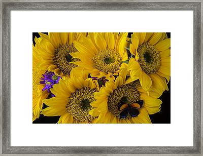 Wonderful Sunflowers Framed Print by Garry Gay