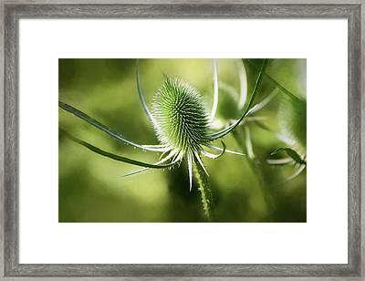 Wonderful Teasel 2 - Framed Print