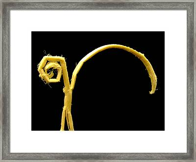 Wondering... Framed Print by Tassos Pasalis