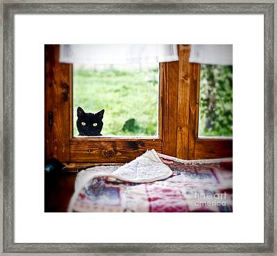 Wondering What's She... Better Investigate Framed Print