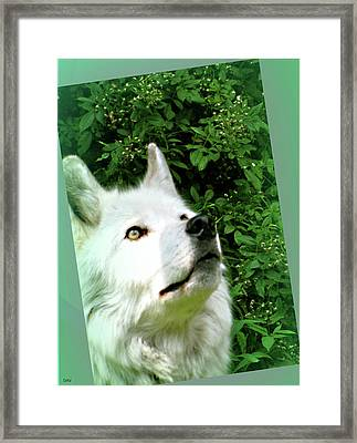 Wonderment  Framed Print by Debra     Vatalaro