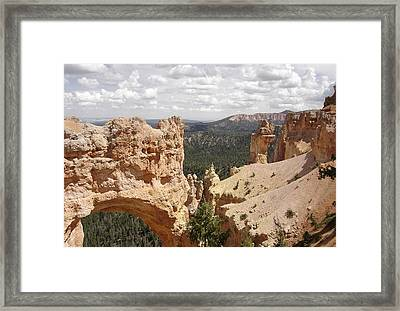 Wonders Of Nature Framed Print by Amy Holmes
