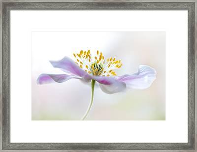 Wood Anemone Framed Print