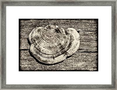 Wood Decay Fungi, Nagzira, 2011 Framed Print by Hitendra SINKAR