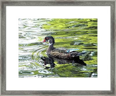 Wood Duck Framed Print by Al Powell Photography USA