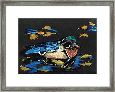 Wood Duck And Fall Leaves Framed Print by Carol Sweetwood