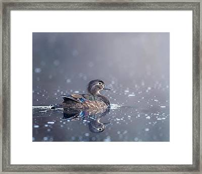 Framed Print featuring the photograph Wood Duck Hen by Bill Wakeley