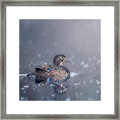 Wood Duck Hen Square Framed Print by Bill Wakeley