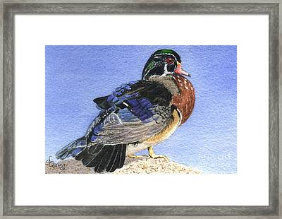 Wood Duck Framed Print by Lynn Quinn