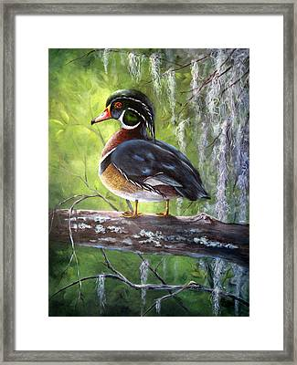 Wood Duck Framed Print by Mary McCullah