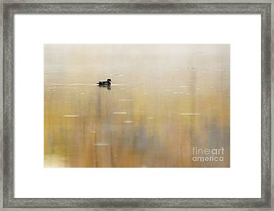 Framed Print featuring the photograph Wood Duck On Golden Pond by Larry Ricker