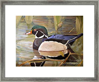 Wood Duck On Pond Framed Print