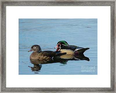Wood Duck Reflections Framed Print