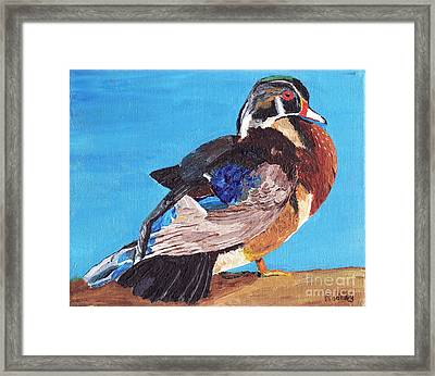 Framed Print featuring the painting Wood Duck by Rodney Campbell
