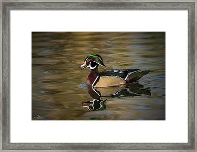Wood Duck Framed Print