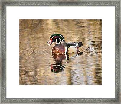 Wood Duck With Reflection Framed Print