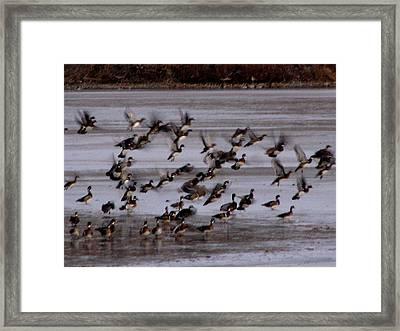 Wood Ducks Framed Print by Athena Ellis