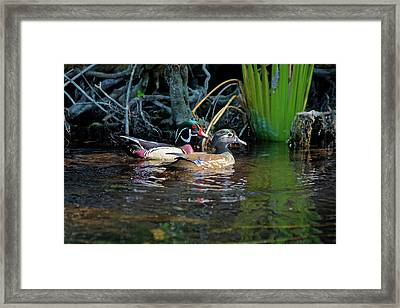 Wood Ducks Pair Framed Print by Sally Weigand