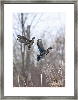 Wood Flight Framed Print