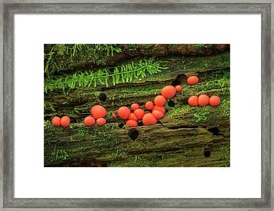 Wood Fungus Framed Print