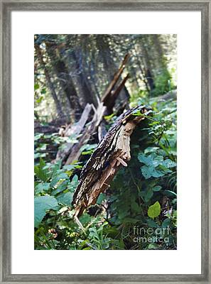 Wood In The Forest Framed Print by Janie Johnson