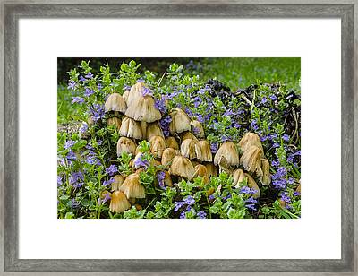 Wood Mushroom 2 Framed Print by Tom Clark
