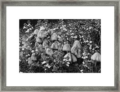 Wood Mushroom 3 Framed Print by Tom Clark