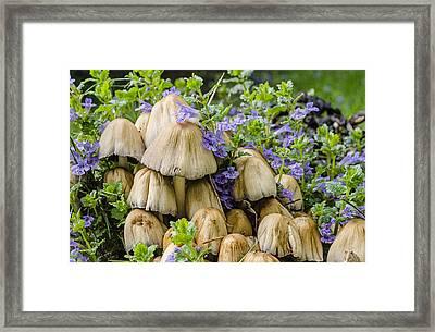 Wood Mushrooms 1 Framed Print by Tom Clark