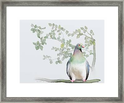 Wood Pigeon Framed Print