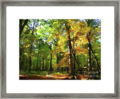 Wood Plank Trail Framed Print