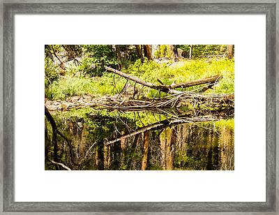 Wood Reflections Framed Print by Brian Williamson