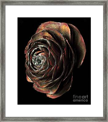 Wood Rose Framed Print by Russ Brown