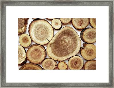 Wood Slices- Art By Linda Woods Framed Print by Linda Woods