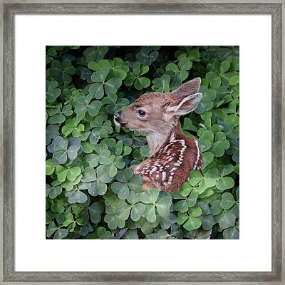 Wood Sorrel Blanket Framed Print