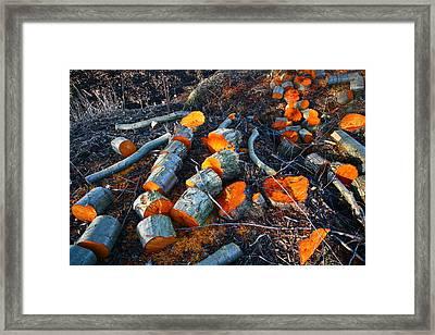 Wood Stack  Framed Print