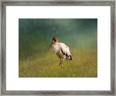 Wood Stork - Balancing Framed Print by Kim Hojnacki