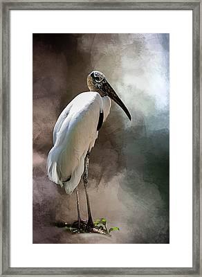 Wood Stork Framed Print by Cyndy Doty