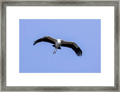 Framed Print featuring the photograph Wood Stork by Gary Wightman