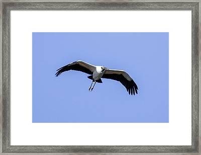 Wood Stork Framed Print
