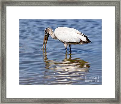 Wood Stork Framed Print by Louise Heusinkveld